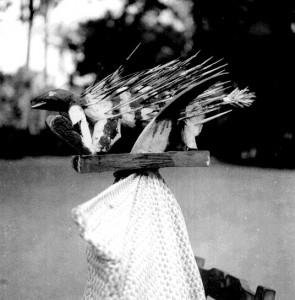 Ebi (porcupine)