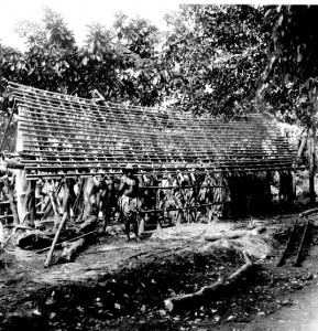House under construction Roof is made from raffia palm branches (locally known as bamboo poles) prior to the attachment to them of tile like mats made out of raffia palm leaves (southern Igbo)